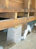 Figure 1: Piled perimeter foundations – Note that the bottom plate is fixed directly over the floor joists.