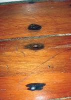 Figure 1: 'Nail sickness' – rust around a corroded nail – is not generally a structural risk.